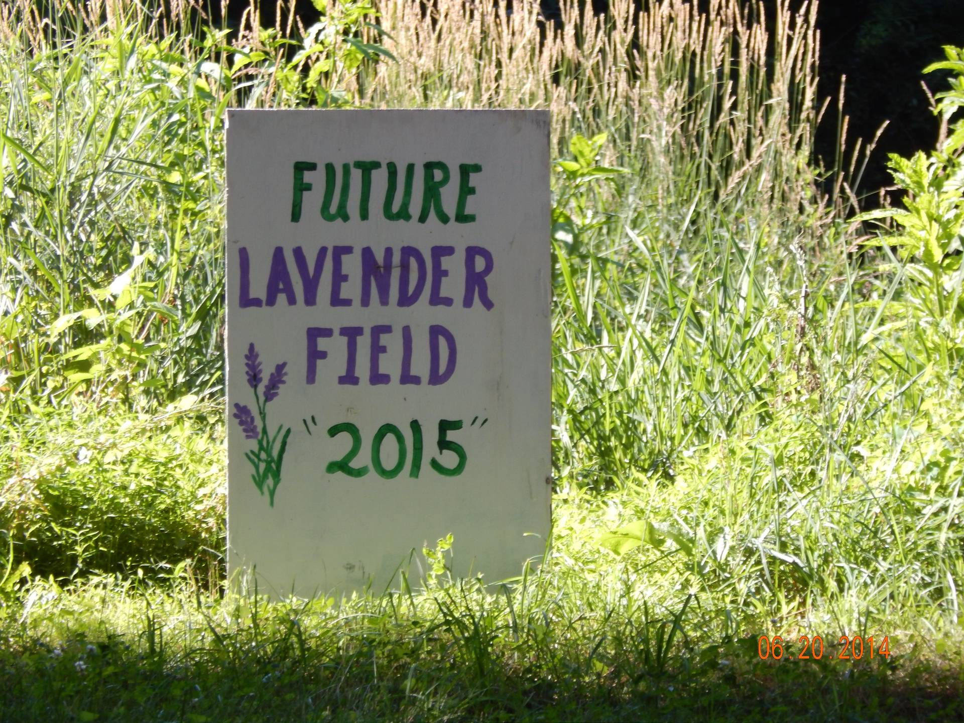 Future Lavender Field of Dreams