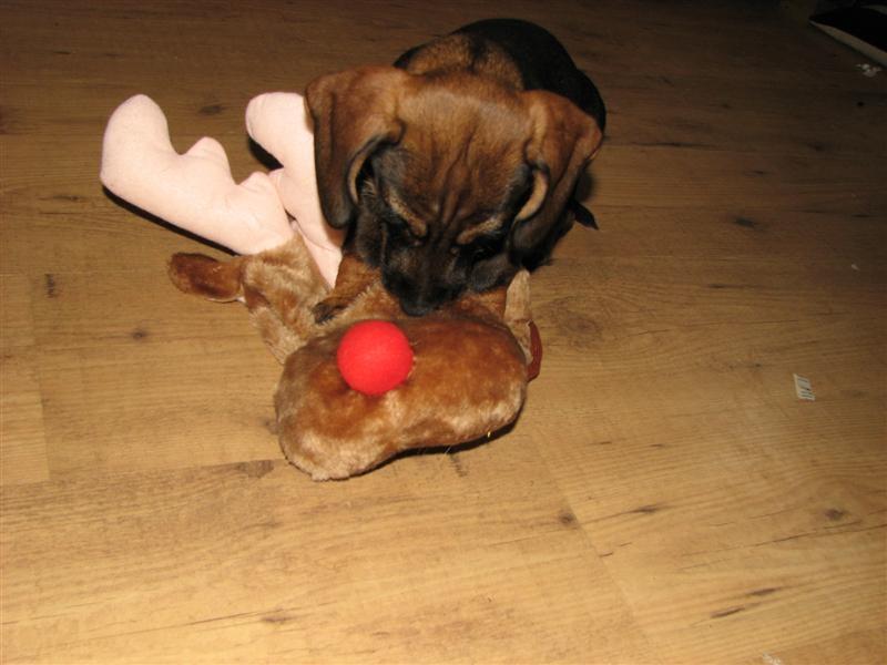 Hollys first deer