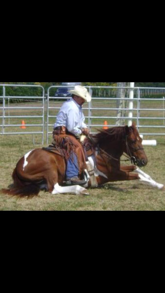 Homestead Horse Day demo