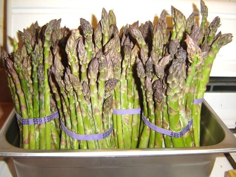 Asparagus amoungus