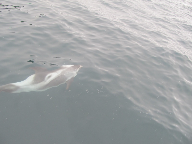 Dolphins putting on show