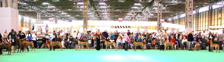 The Limit Dog class