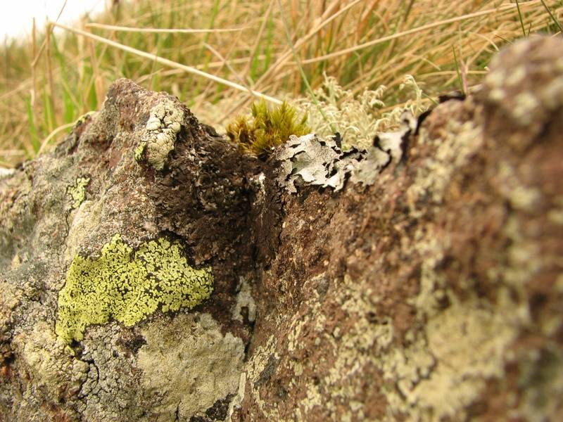 Lichens on wall