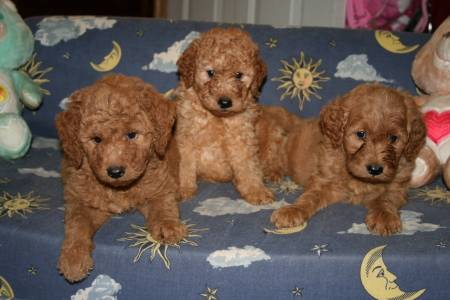 Faiths past puppies