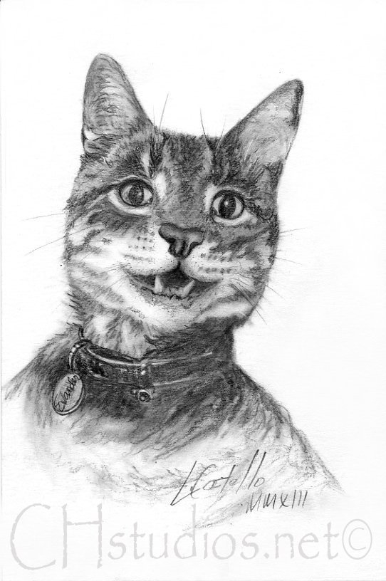 Evander Pet Portrait Commission