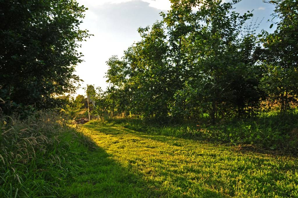 Looking back from the ringfort