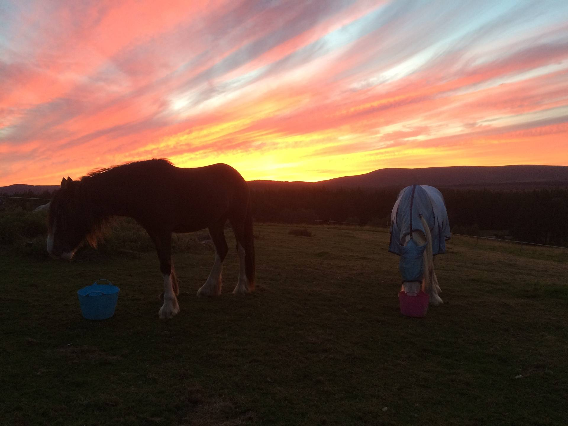 Sunset at feed time
