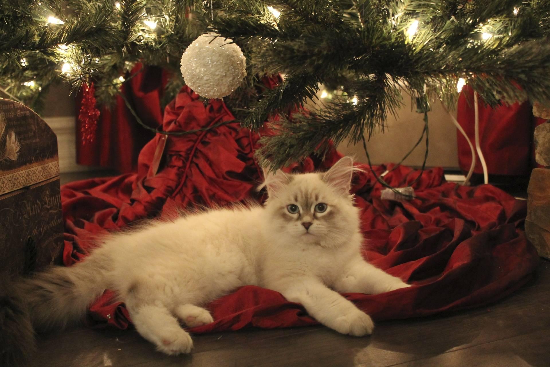 Mia under the Christmas tree!