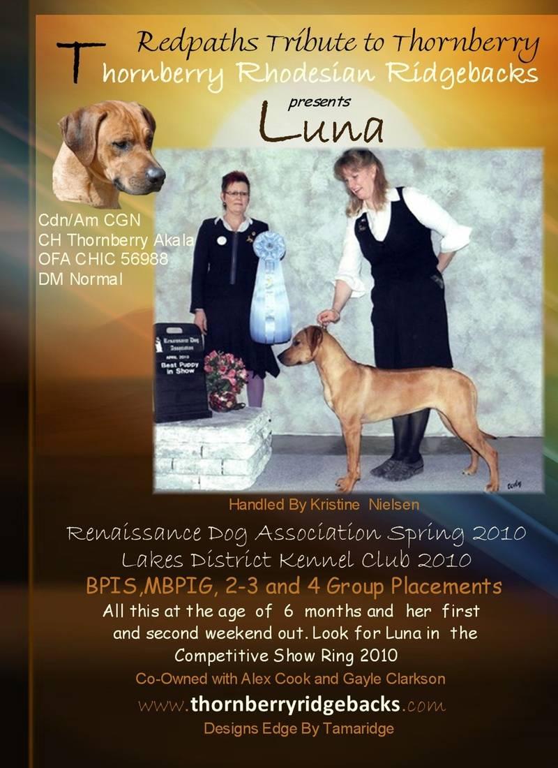 Luna Dog Digest ad