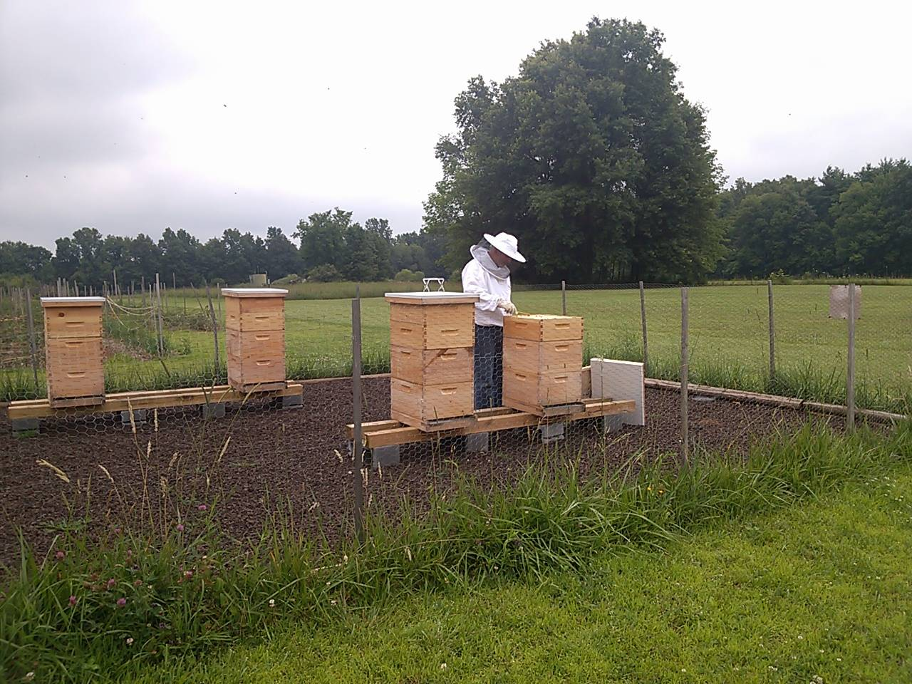 Our Apiary or Bee yard, Lisbon, Ohio, 44432, usa