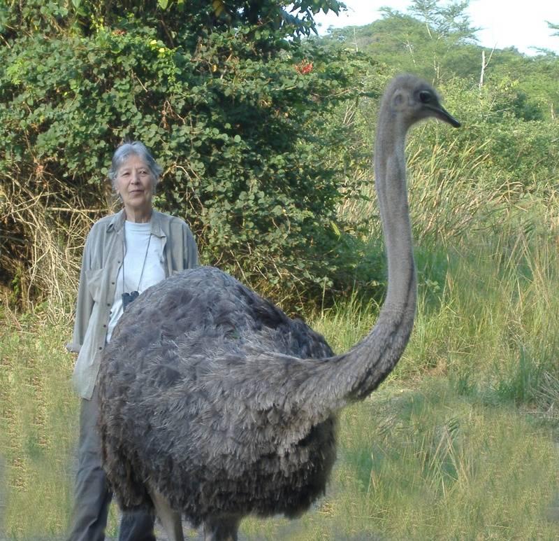 Ostrich Mo