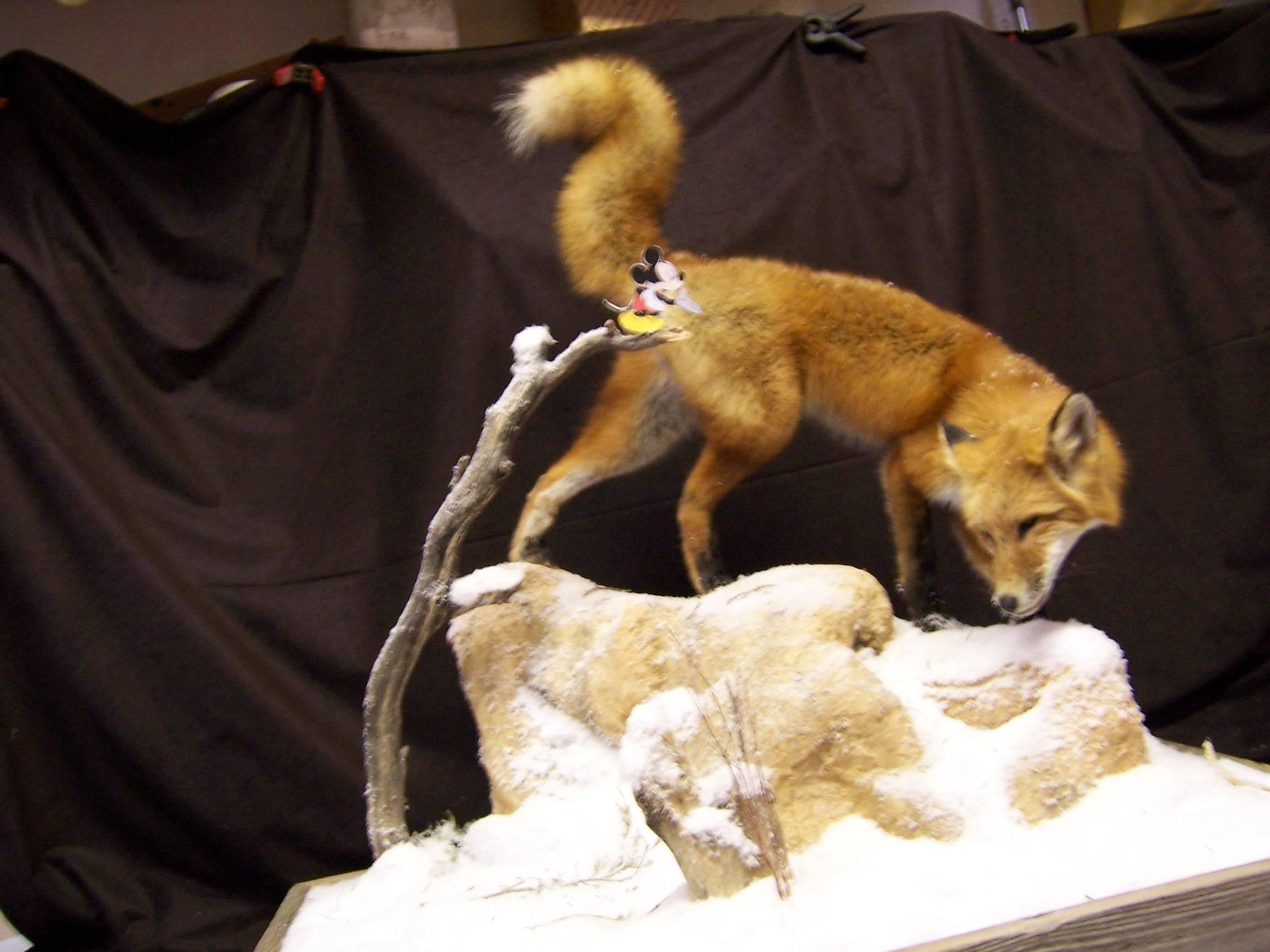 Sneaky Fox