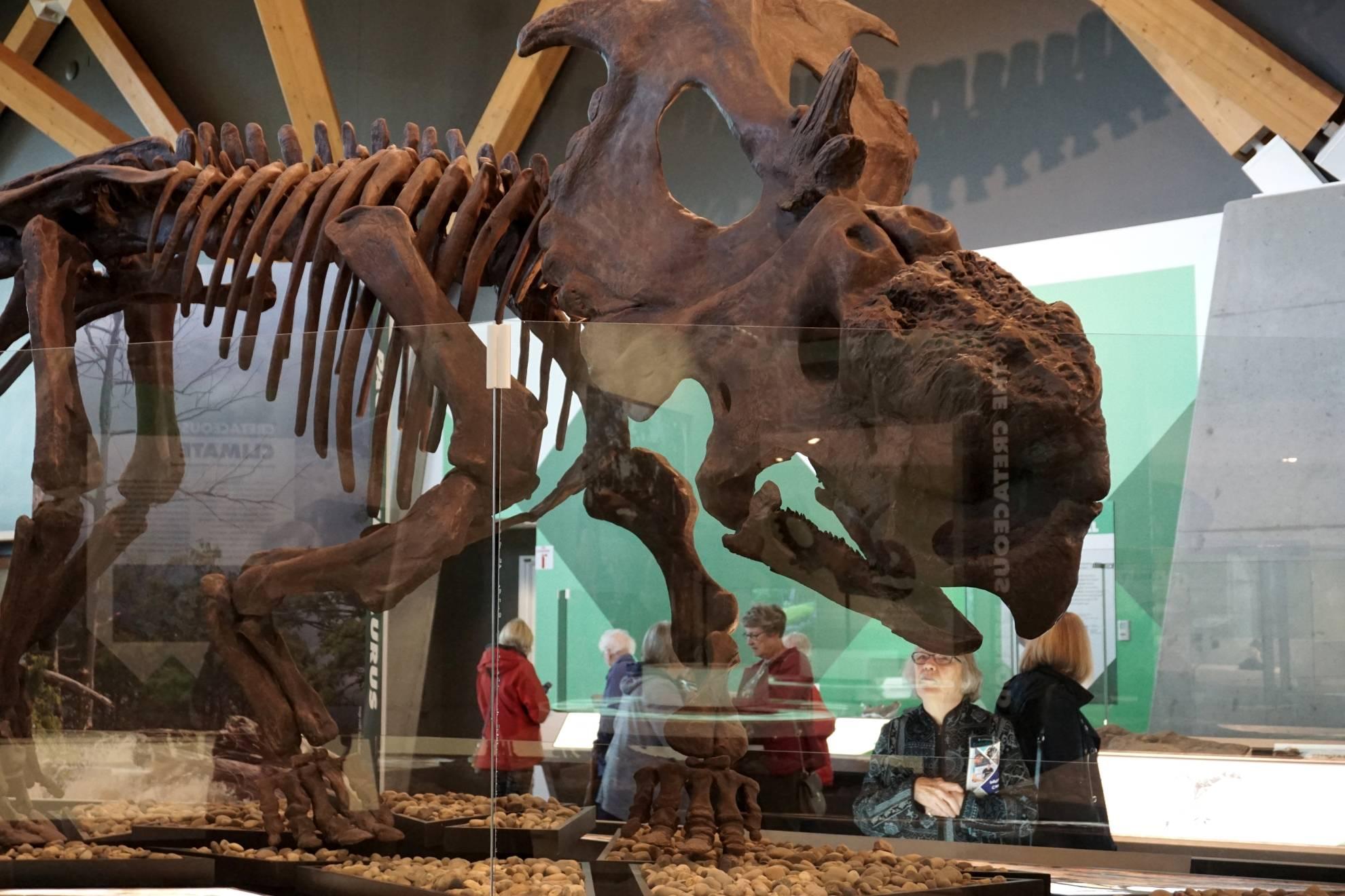 Phillip Currie Museum