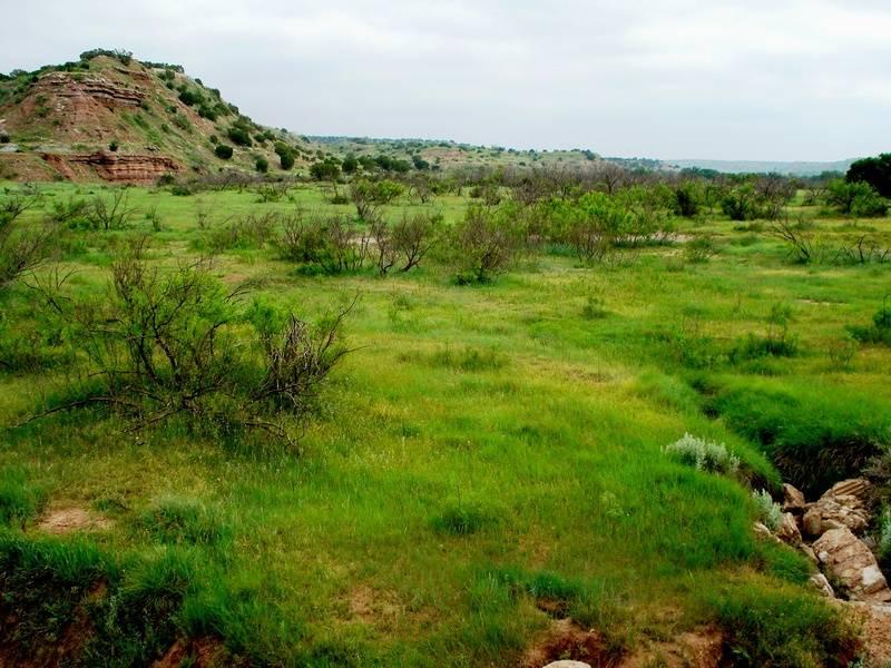 Spring pastures, SSWMA