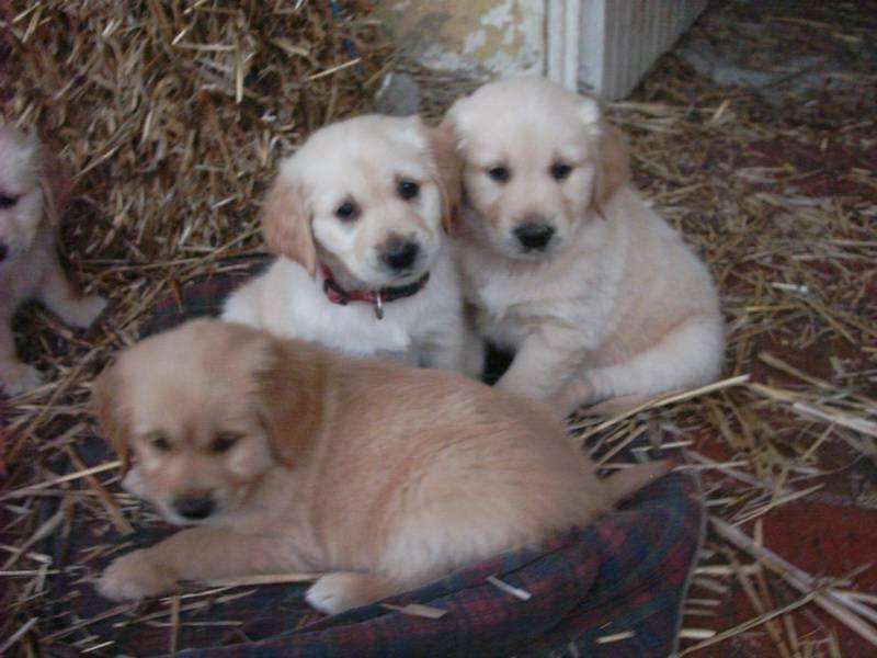 Pups 05
