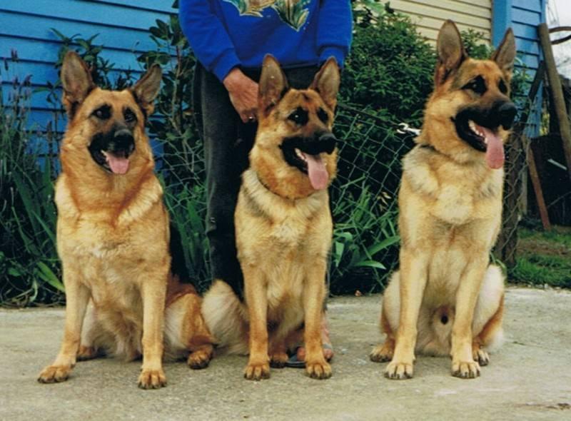 Bella, Iza and Eddie