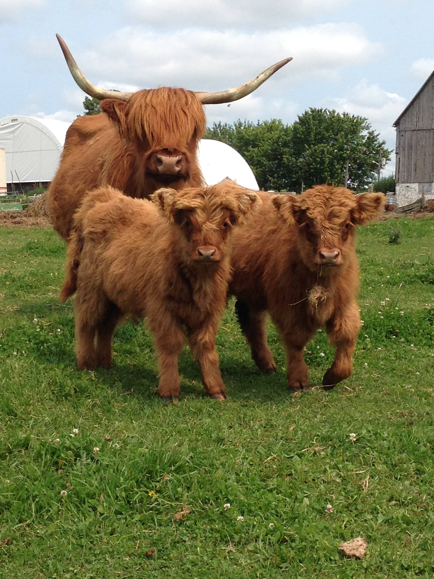 Milly & her Twins