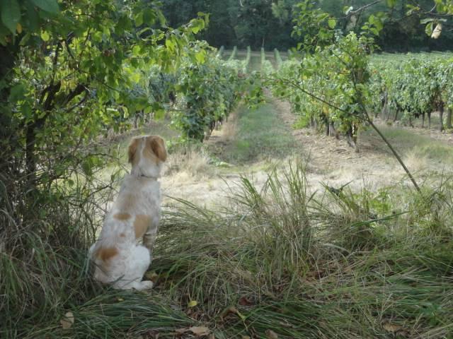 Jess dans les vines