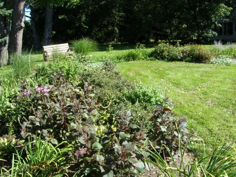 Perennial garden with bench