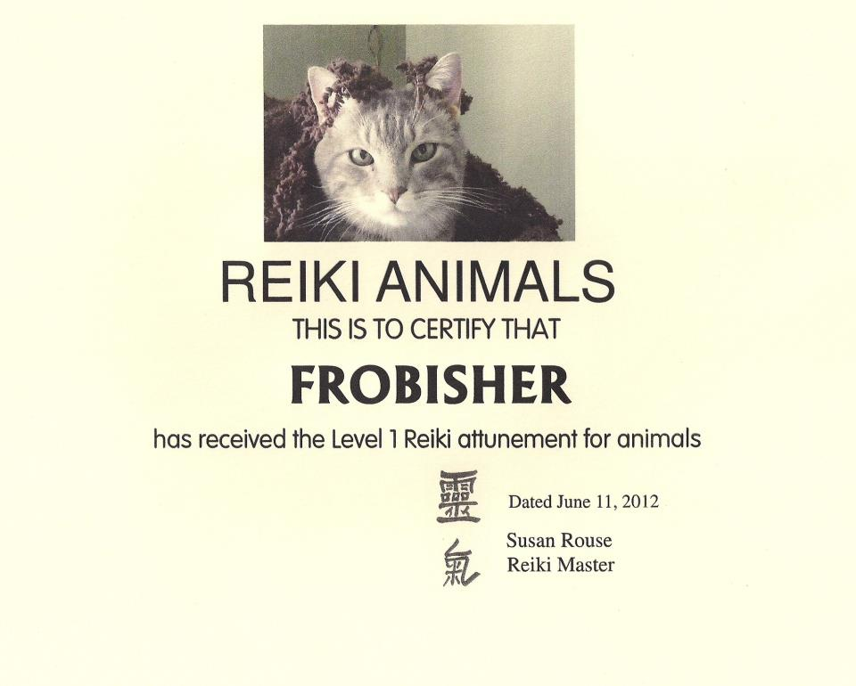 Frobisher the Reiki Cat