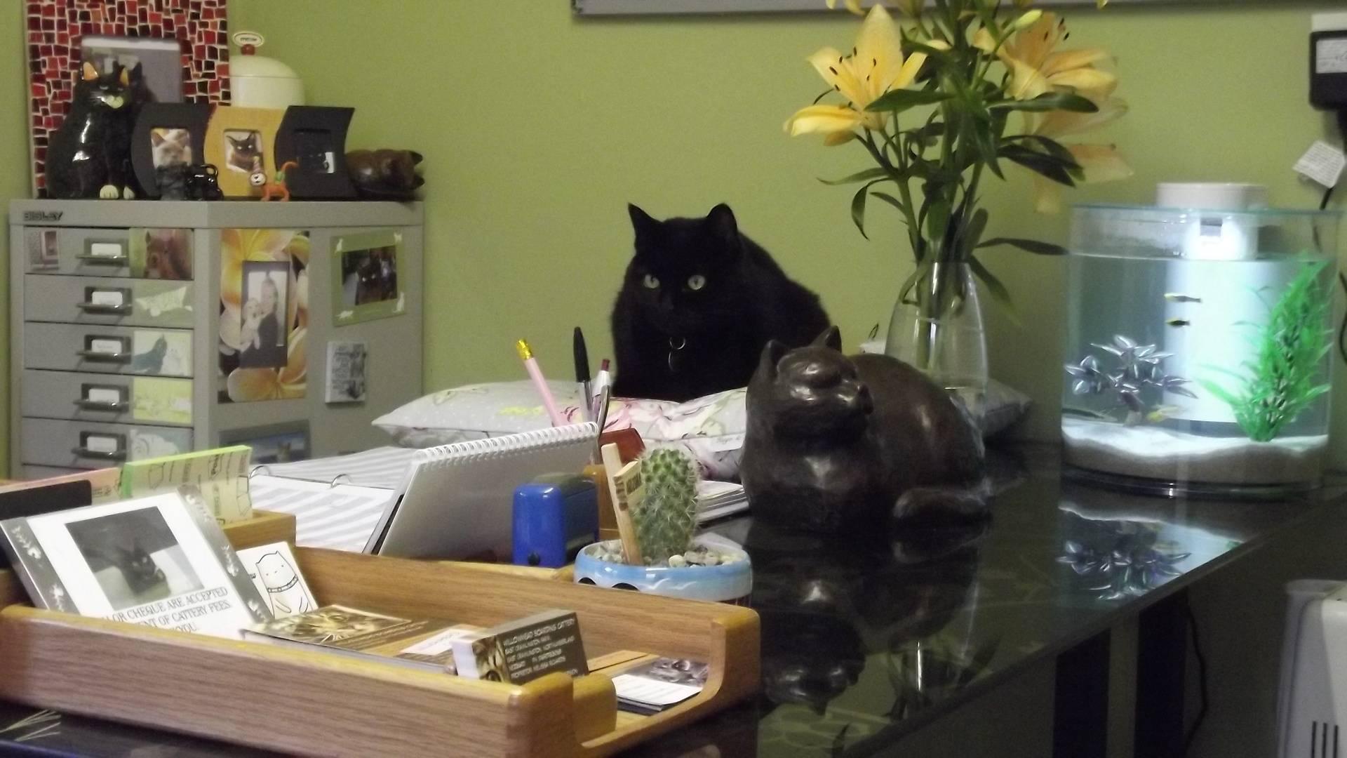 Matilda -the cattery cat.