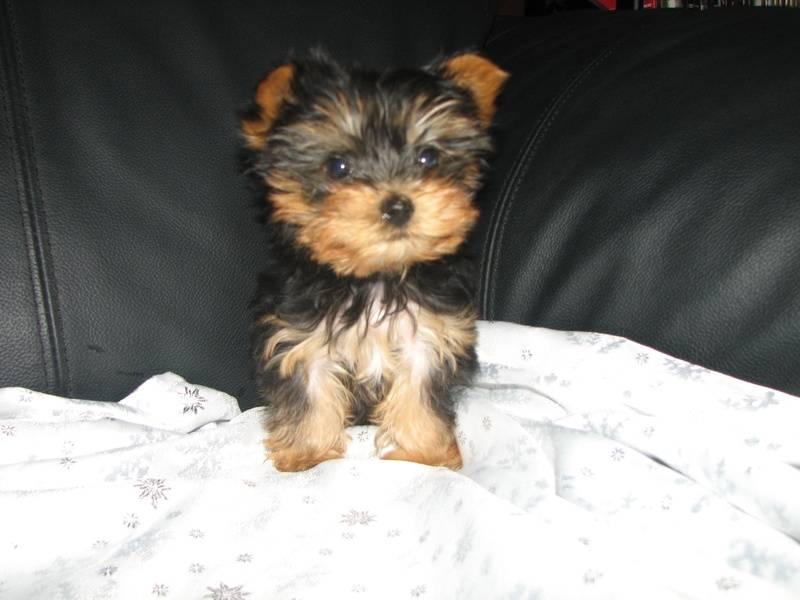 Female Pup 1