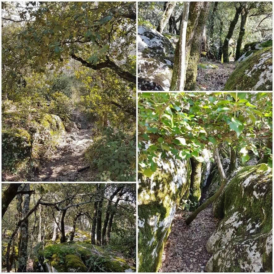 Forêt de la Sainte Baume