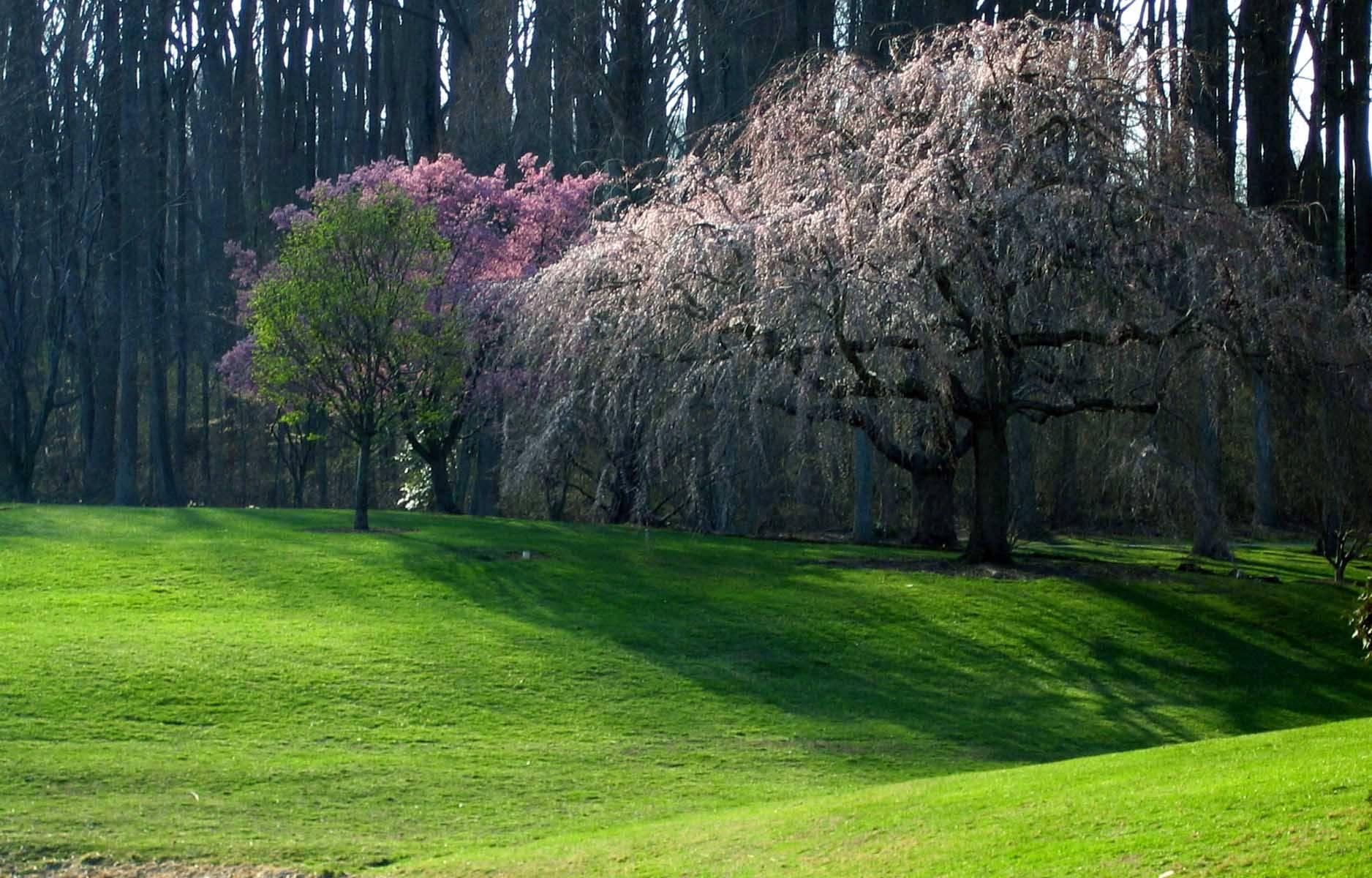 Brookside Gardens Spring Trees
