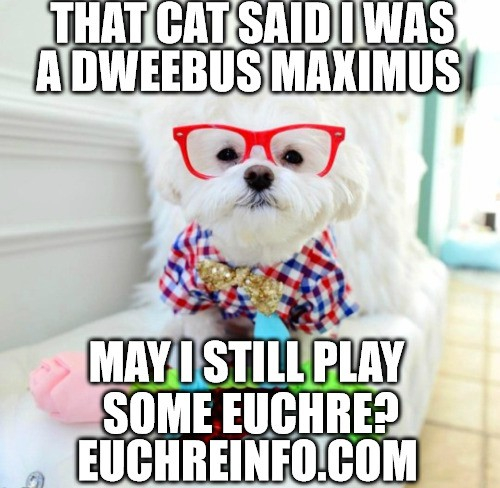That cat said I was a dweebus maximus. May I still play some Euchre?