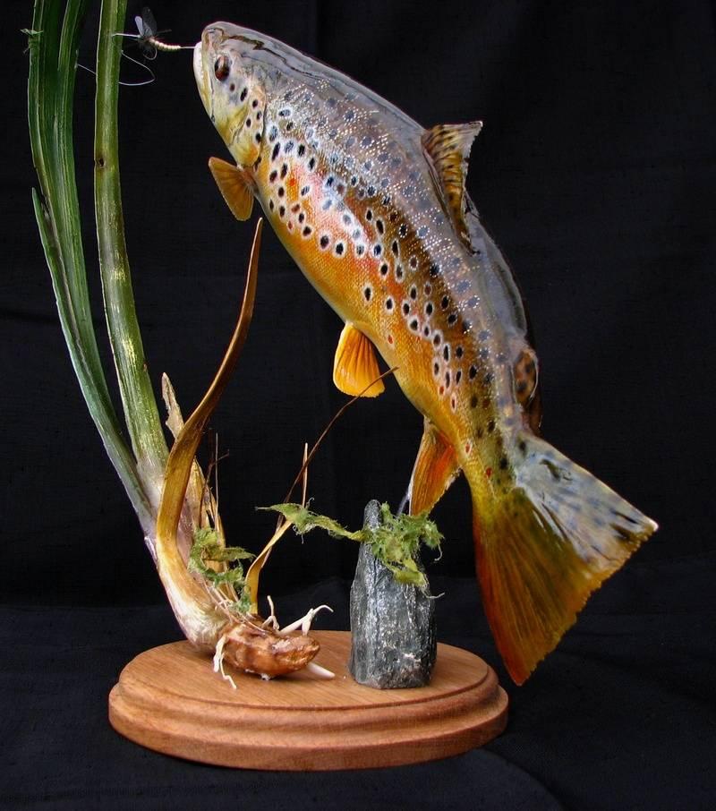 "16"" Brown trout pedestal"