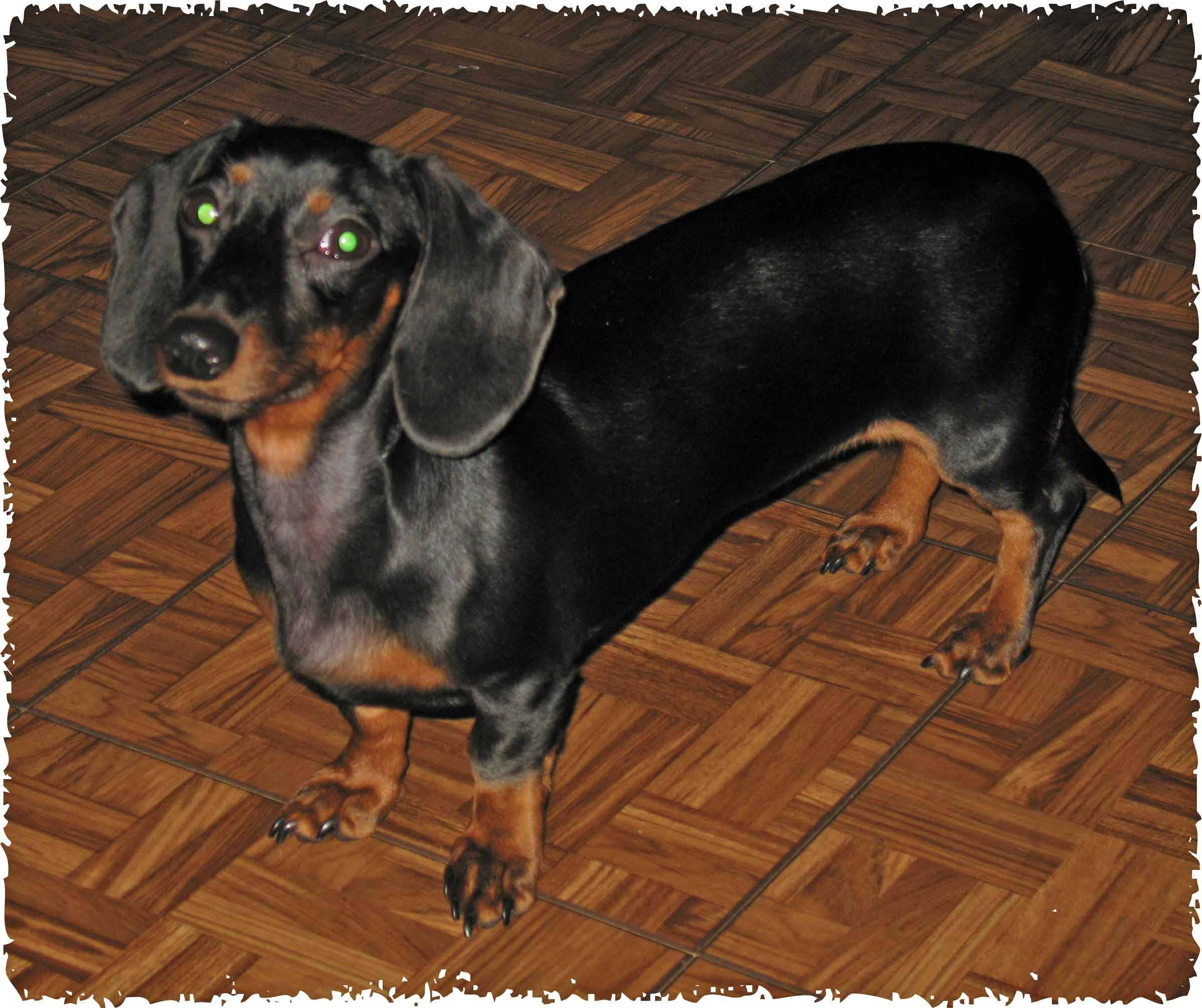 Winnie aka Kayla 1 yr. old
