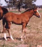As foal 2000