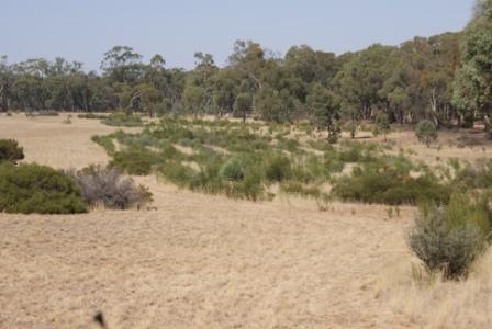Overview of a revegetation site