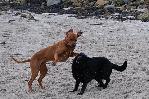 Elvis and Bonnie playing