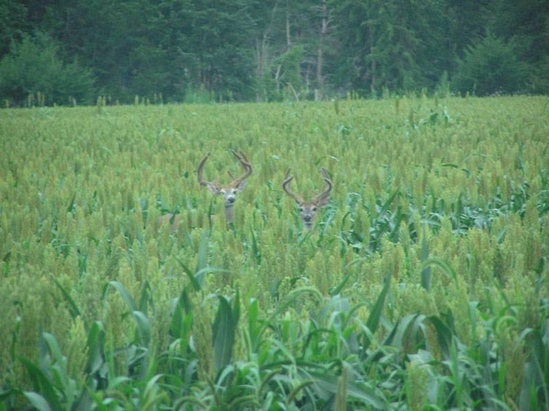 Nebraska Crops