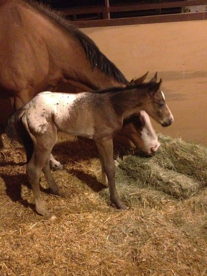 Kelly and Dave Potter's colt