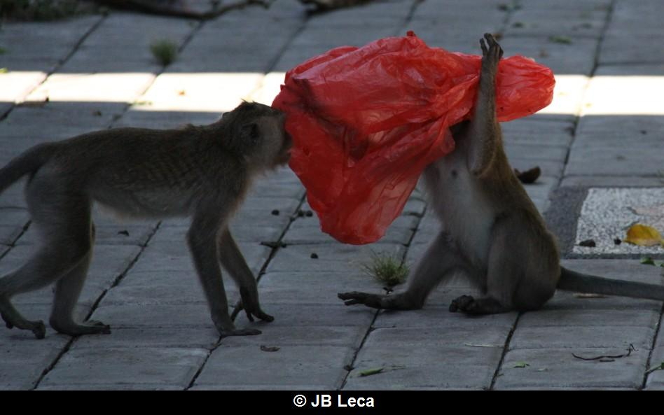 eye-covering play with plastic bag while social playing (Pulaki)