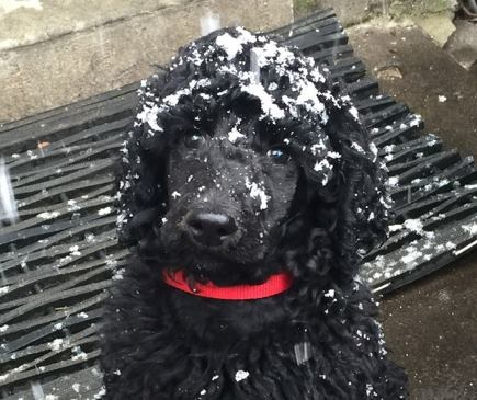 Red enjoying the new snow at her home in NOVA.  9 weeks.