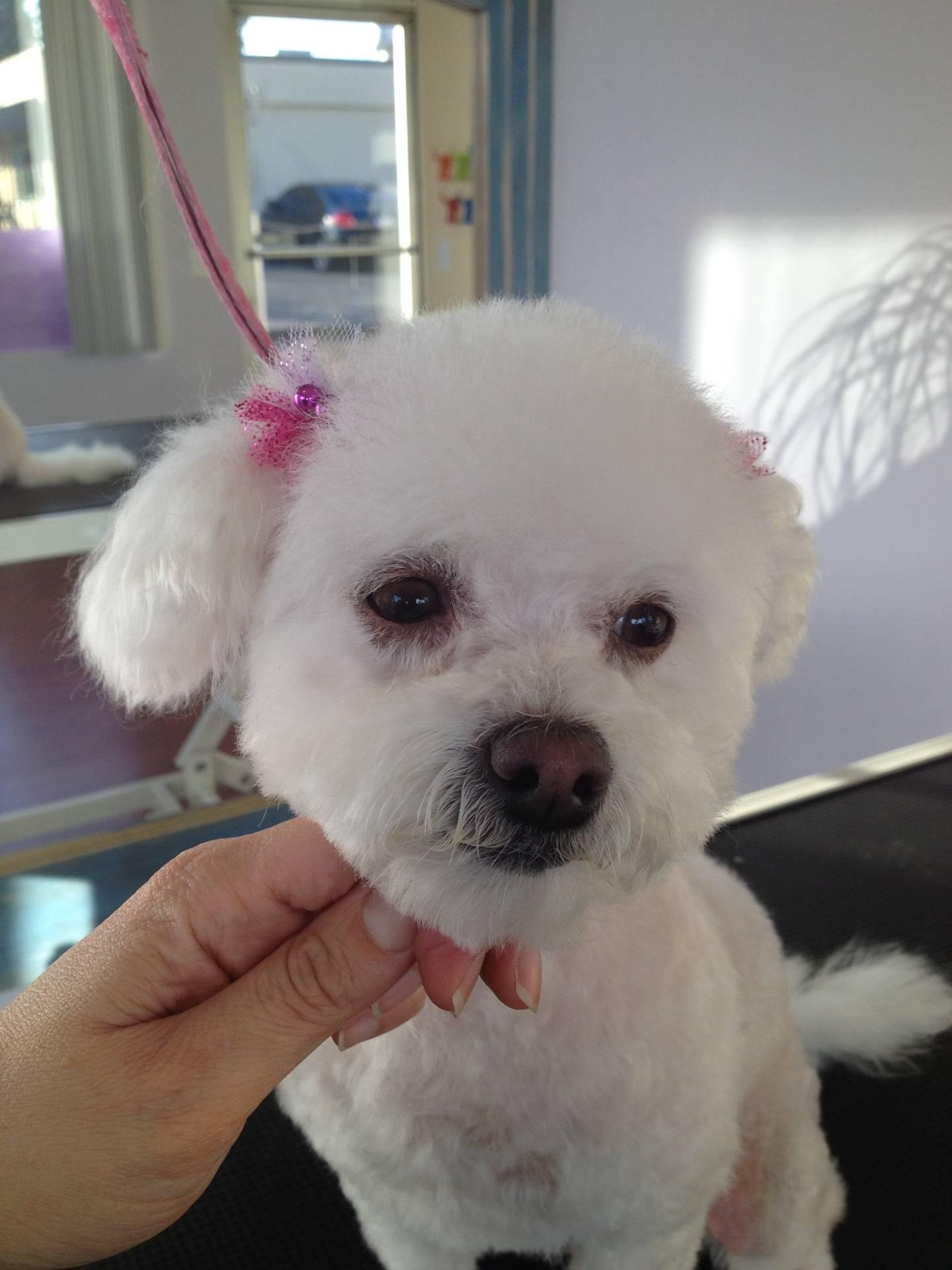 After Hair Cut !