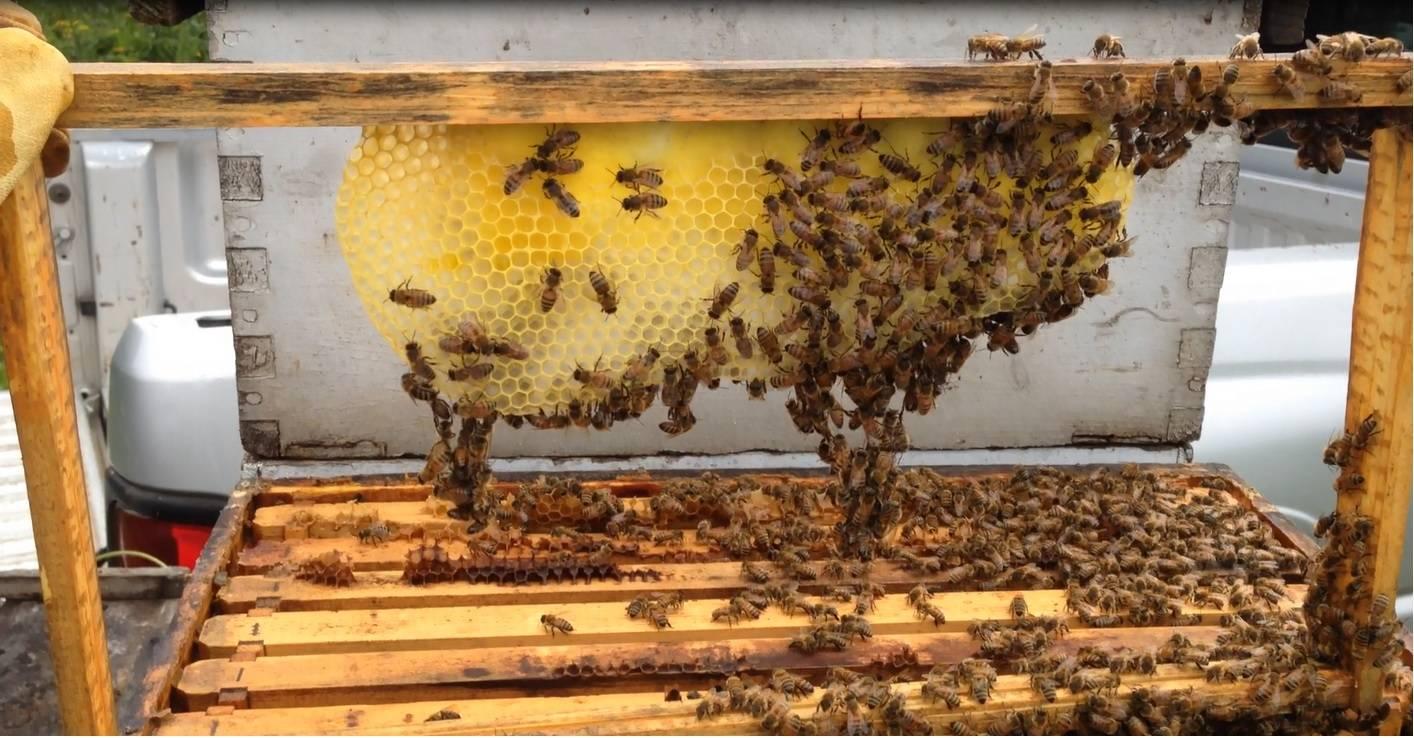 Engineering a honey comb