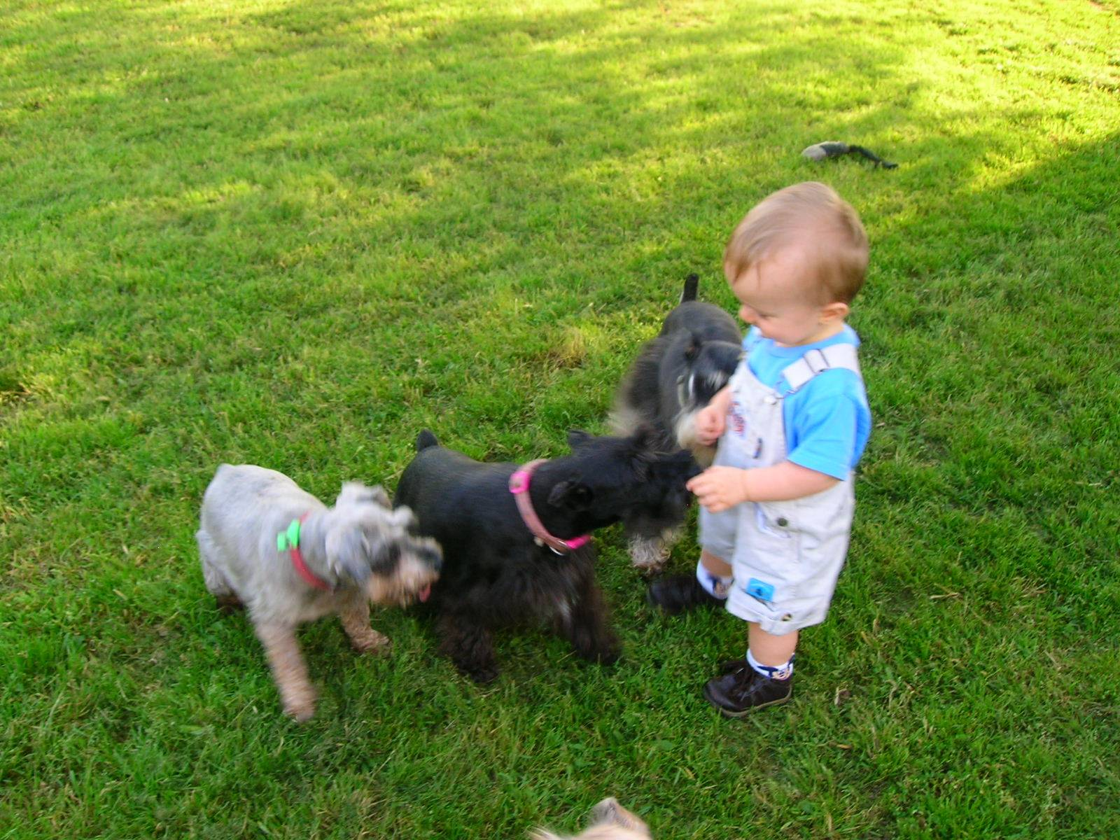 Jonah playing with dogs