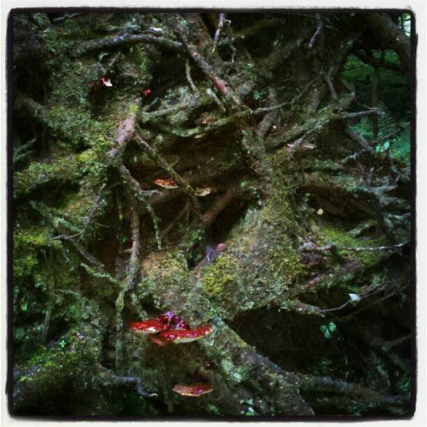 Roots of Reishi