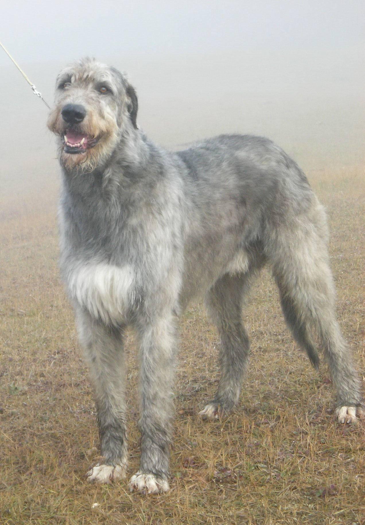 Grady in the mist