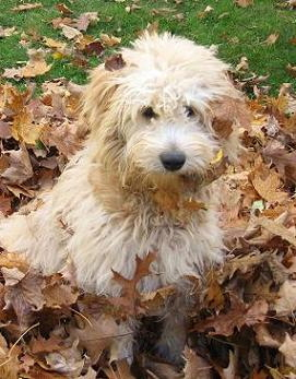 otis playing in the leaves