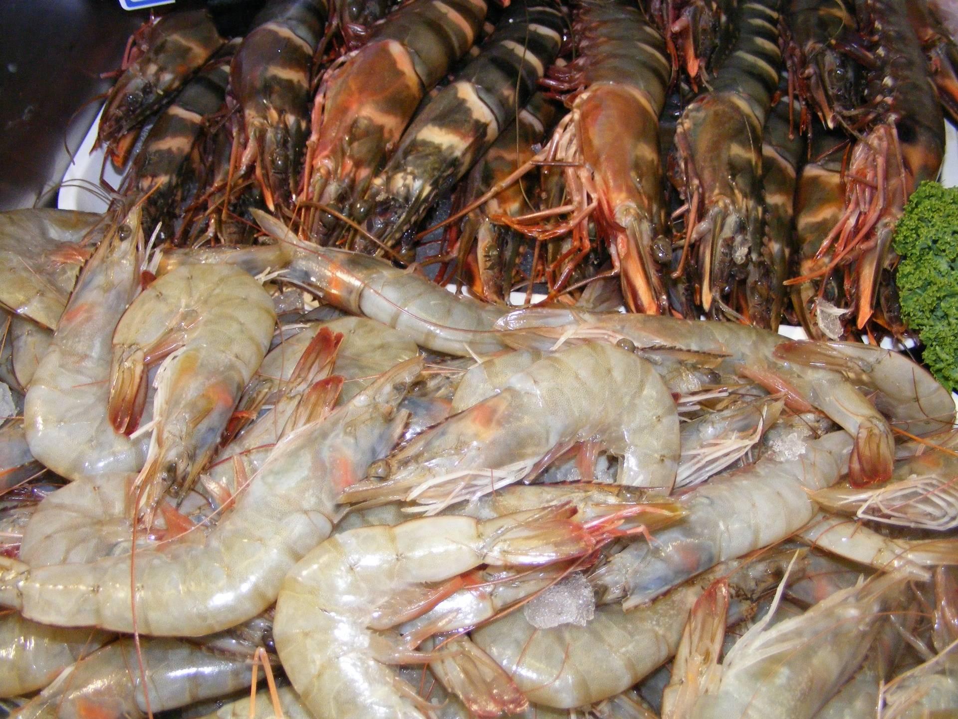 raw shell on prawnws