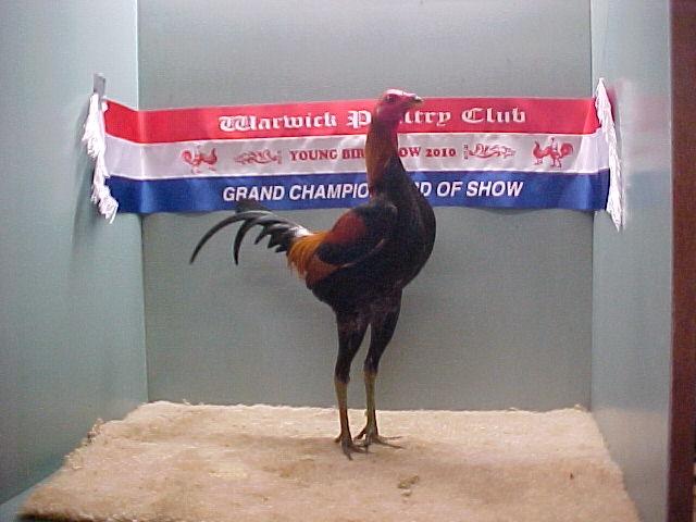 Champion Bird in Show - 2010 YBS
