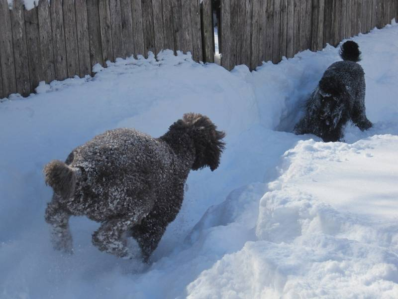 Penny and Pepper playing in the blizzard of 2010.  2/7/10.