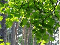 Trees help supply the Oxygen we need to breathe.