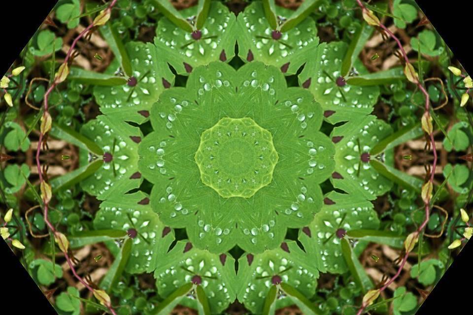 Kaleidoscope Clover