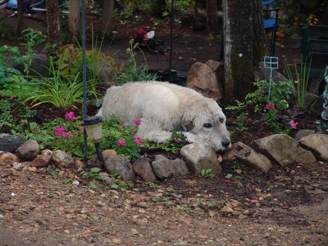 Blue and the flower bed